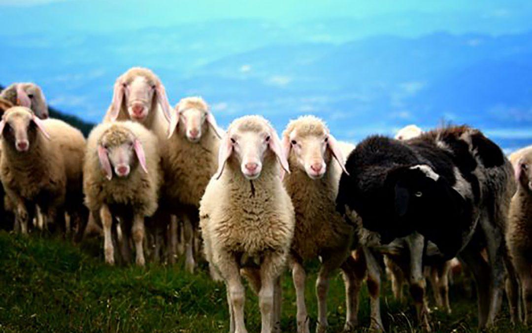 Welches Franchisesystem ist für Sie geeignet? (2. Teil), Wie finde ich die schwarzen Schafe?