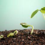 Wie Außergewöhnliches und Wachstum entsteht