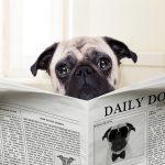 Todoist: Wie Du den Eingangskorb zum Speichern von Webseiten nutzen kannst